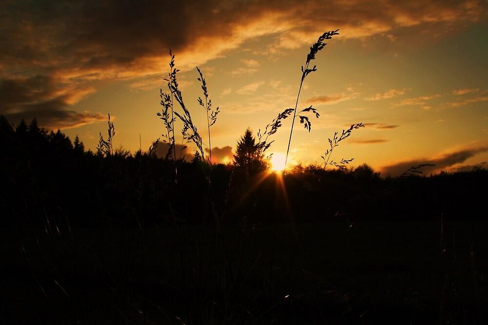 through the weeds by Joshua Greiner