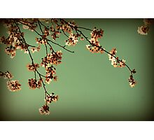 Elegance in bloom Photographic Print