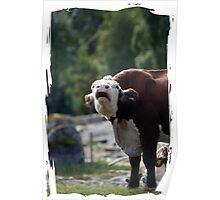 grumpy cow talk Poster