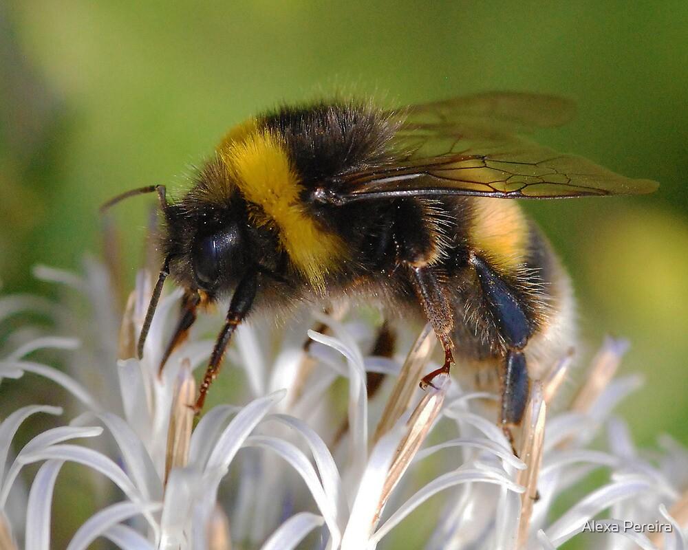Bumble Bee 2 by Alexa Pereira