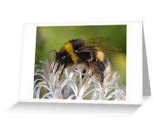 Bumble Bee 2 Greeting Card