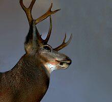 Majestic Buck by Al Bourassa