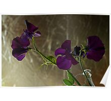 Sweet Pea Floral Poster
