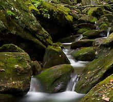 Lower Walker Creek by Forrest Tainio