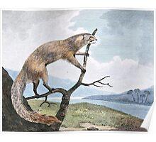 Ichneumon (Mongoose) Wildlife Art Poster