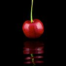 Solitary Cherry by RandiScott