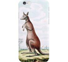 Kangaroos Vintage Drawing iPhone Case/Skin