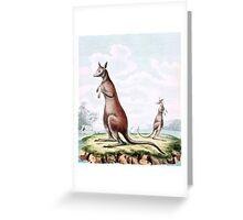 Kangaroos Vintage Drawing Greeting Card