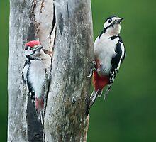 Mama & Junior Woodpecker by Sarah-fiona Helme