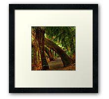 Tarra Valley Archway Framed Print