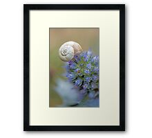 Snail on Sea Holly Flower Framed Print