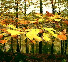 Autumn Gold - Snainton Forest by Merice  Ewart-Marshall - LFA
