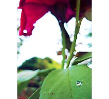 There's a hidden paradise in every rose... Photographic Print