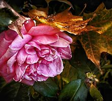 October Rose by Nadya Johnson