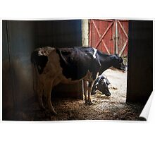 Dairy Farm Poster