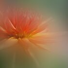Dream Dahlia by enchantedImages