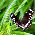 If a Butterfly Flaps it's Wings by bygeorge