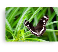 If a Butterfly Flaps it's Wings Canvas Print