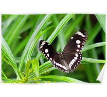 If a Butterfly Flaps it's Wings Poster