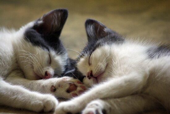 Sleepy Heads by bygeorge