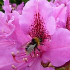 Bee and Rhodie by Jenny Taylor