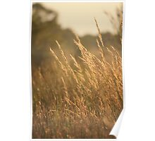 July Evening Breeze Poster