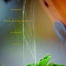 Tangled web by Christina Martin