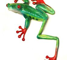 Red Eyed Tree Frog by mauli