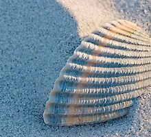 Shell Buried in Sand by imagewerks