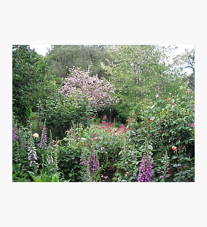Country Garden Photographic Print