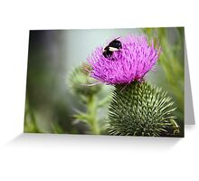 Thistle Buffet  Greeting Card