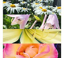 Flower Collage Photographic Print