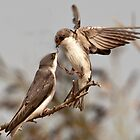 Feeding her Baby on the Fly (Literally) by David Friederich