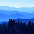 Great Smokey Mountains, USA by Tamara Travers