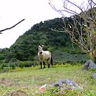 Tethered Pony, Volcan, Panama by Al Bourassa