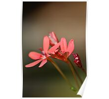 flame freesia Poster
