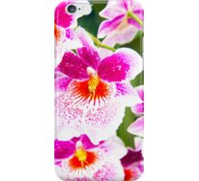 Cattleya White And Pink Orchids iPhone Case/Skin