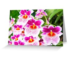 Cattleya White And Pink Orchids Greeting Card