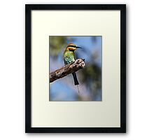 ''Rainbow Bee-eater 2'' Framed Print