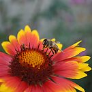All the honey a bee gathers during its lifetime doesn't sweeten its sting by Kirsten Moody