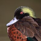 Chesnut Teal (male) by mosaicavenues