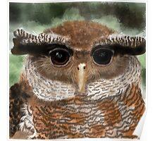 Malay Eagle Owl Portrait Poster
