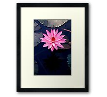 Just One - pink waterlilly Framed Print
