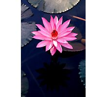 Just One - pink waterlilly Photographic Print