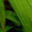 Amongst Green Leaves by Joe Mortelliti