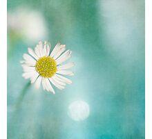 Daisy Love Photographic Print