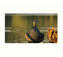 Great Blue Heron Sitting on a Rock Reflecting at Dusk Art Print