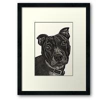 Staffordshire Bull Terrier Pen Drawing Framed Print