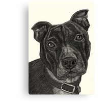 Staffordshire Bull Terrier Pen Drawing Canvas Print