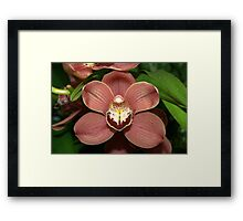 Orchid up close Framed Print
